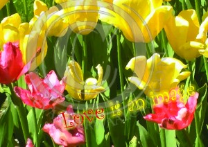 tulp love is an image watermerk